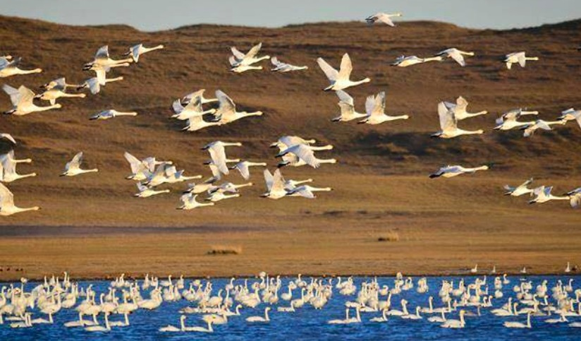 Ganga Lake it is home to thousands of migrating Swans