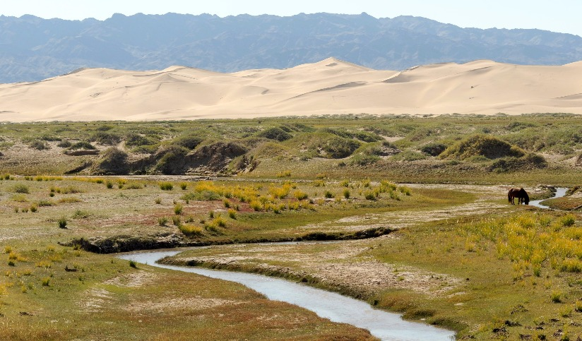 Green oasis in the Gobi